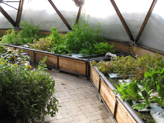 The Infamous Solar Geodesic Aquaponics Greenhouse