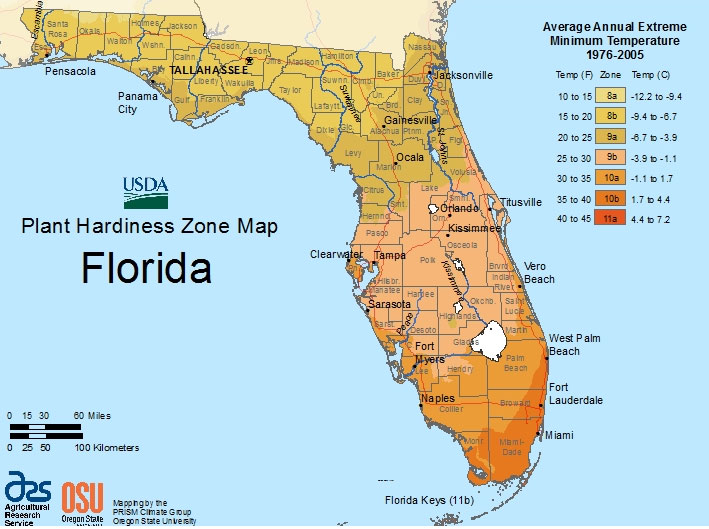 Florida planting calendar for south region zone 10a - South florida vegetable gardening ...