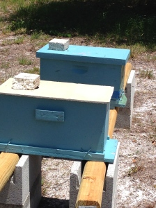 GreenView Aquaponics Family Farm and Apiary NUCs
