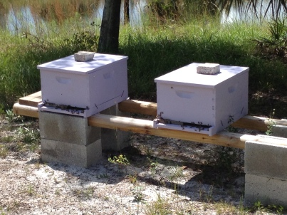 Check on the honey bees. Rained the past three days. They are VERY happy it is sunny again.