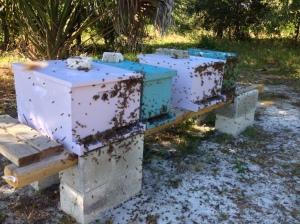 Unhappy Bees