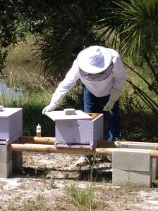 IPM Organic Beekeeping